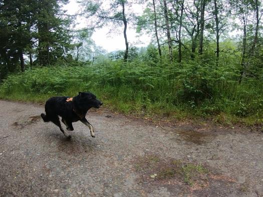 Maia running